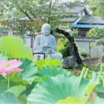 蓮の綺麗な善長寺